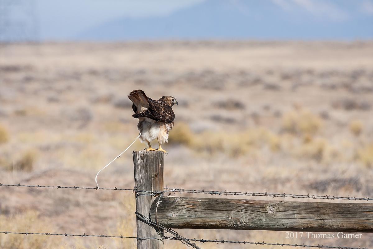 IMAGE: http://www.garnerfoto.com/potn/birds/hawks/_MG_9732.jpg